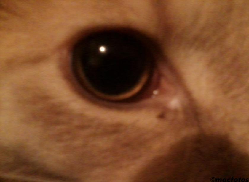 1123-Cat's-Eye-