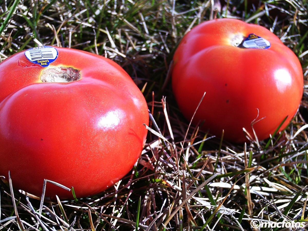 WPC: Fresh Tomatoes