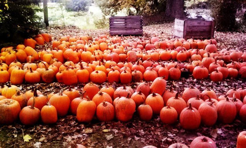 pumpkinjasgh